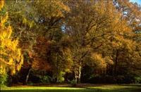 Bäume im Herbstlaub im Park..jpeg