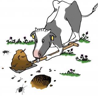 Kuh mit Schaufel als Logo des ECHT KUH-L-Wettbewerbs