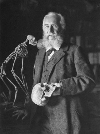 Porträtfoto  von Ernst Haeckel, 1906