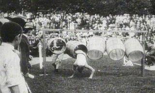 Tonnespringen bei den Olympischen Spielen in St. Louis, 1904