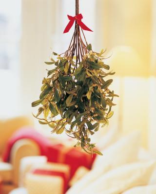 Mistelzweige als Weihnachtsdekoration