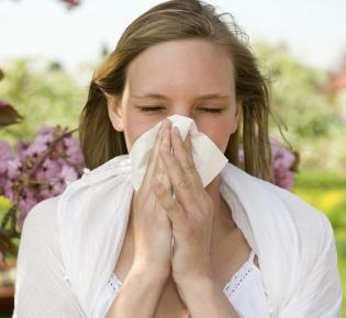 Niesanfall einer Frau mit Heuschnupfen