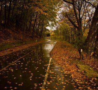 Nasses Herbstlaub auf Straße