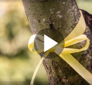Gleb Schleife um den Stamm eines Obstbaums