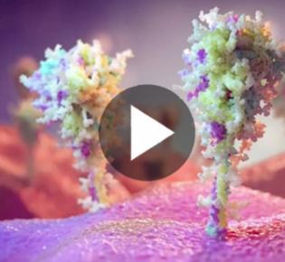 Impfproteine auf Zelloberfläche
