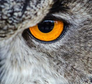 Auge in Auge mit einem Uhu