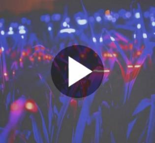 Leuchtendes Gras im UV-Licht