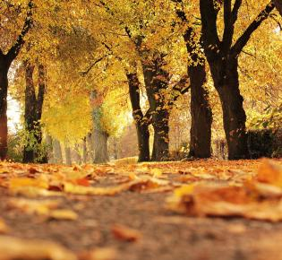Herbstliche Straße