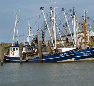 Fischereiboote im Hafen von Norddeich