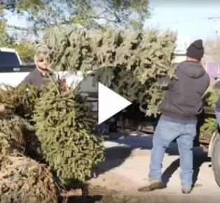 Weihnachtsbaumabtransport