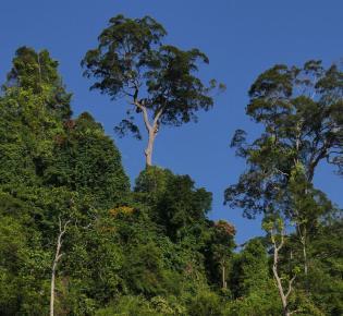 Stockwerkbau des Tropischer Regenwalds
