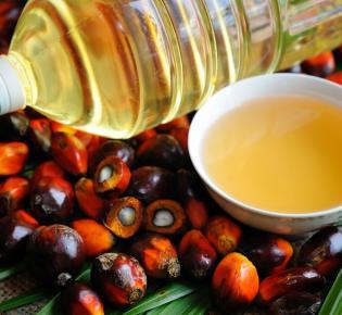 Symbolbild Palmöl
