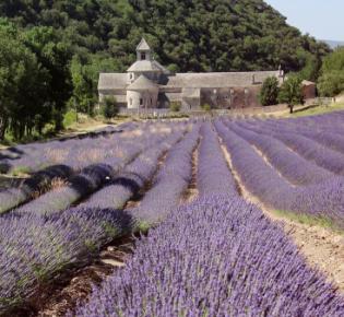 Ostansicht der Abbaye de Sénanque zur Lavendelblüte
