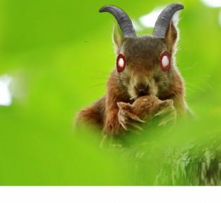 Teuflisches Eichhörnchen