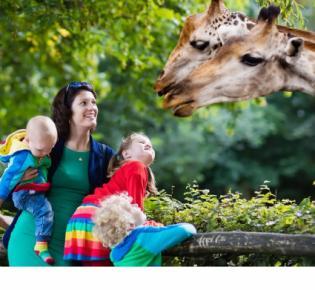 Zoobesucher und zwei Giraffen