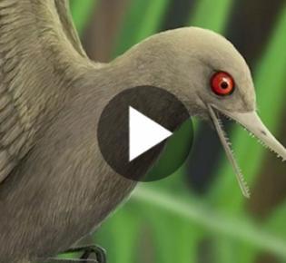 Vermeintlicher Flugsaurier