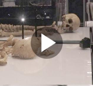 Skelette zweier Wikingerkrieger