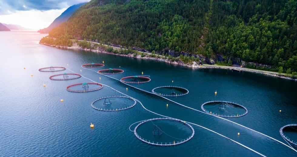 Käfiggehege zur Lachszucht an der norwegischen Küste