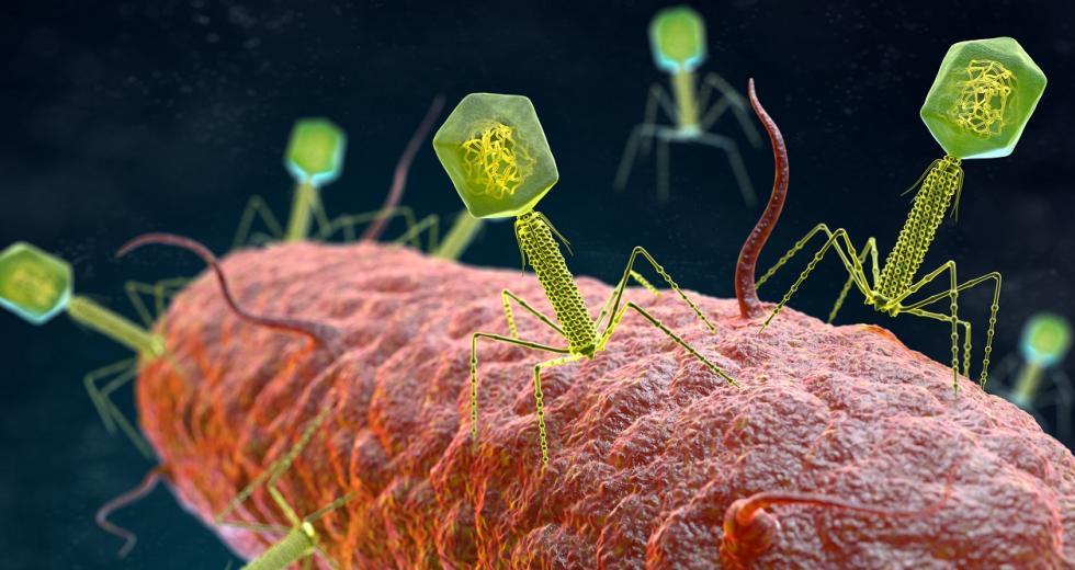 Bakteriophagen greifen ein Bakterium an. 3D-Illustration