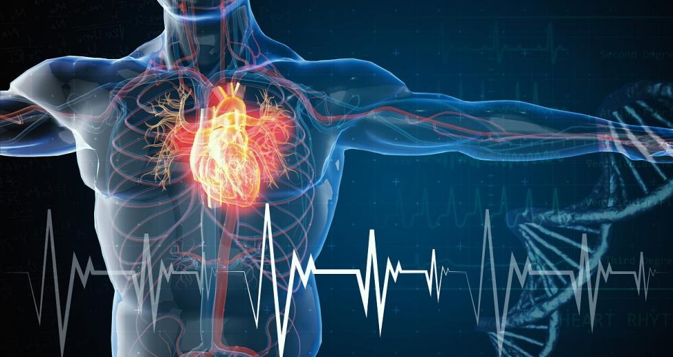 Symbolbild Herz-Kreislauf