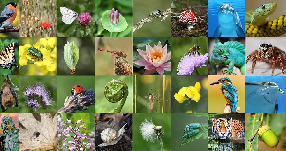 Tier- und Pflanzenbilder zur Artenviefalt