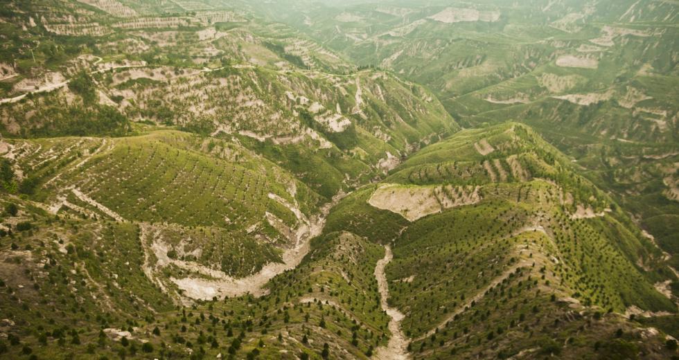 Wiederaufforstung in der Provinz Shanxi, China