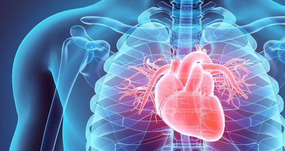 Transparenter Oberkörper mit farblich hervorgehobenem Herz