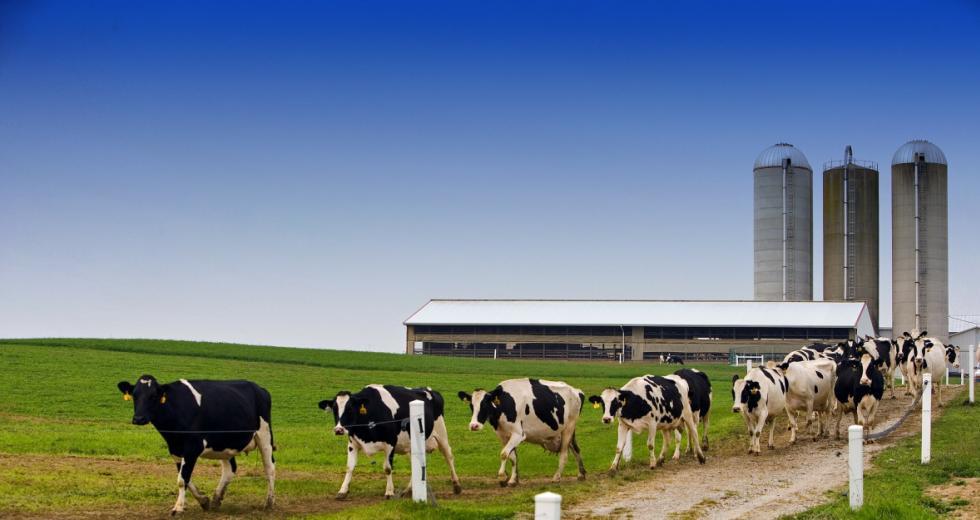 Farm mit Kühen