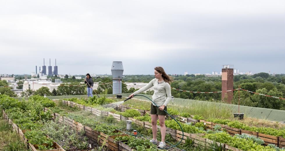 Gemeinschaftsgarten auf eiem Hausdach in Berlin