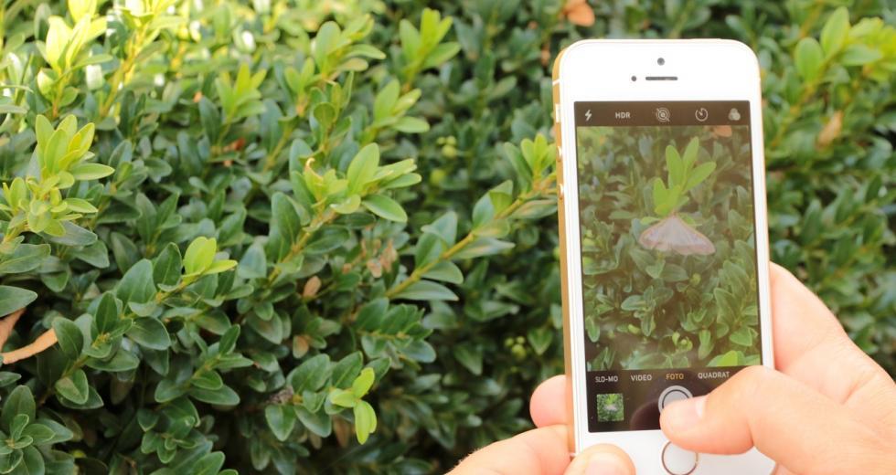 Insektenwelt-App im Einsatz