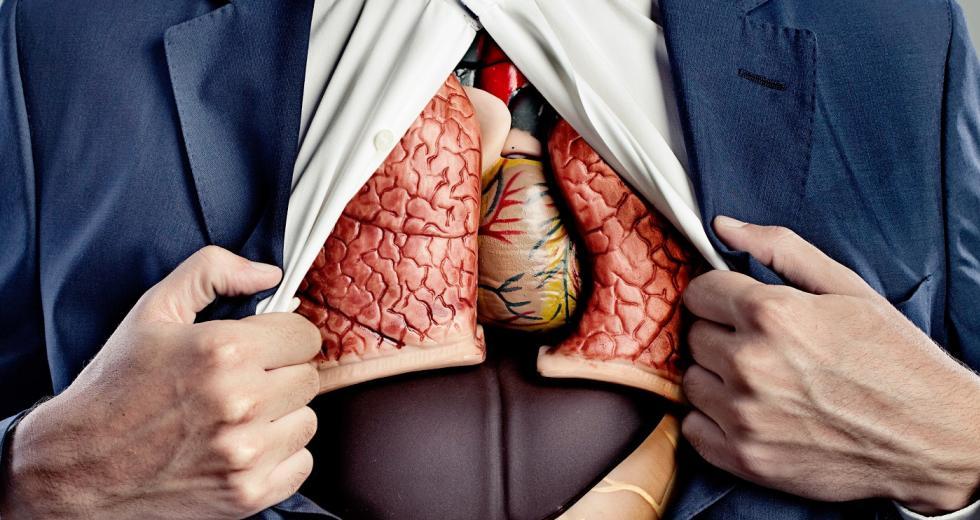Männlicher Torso mit Organmodellen hinter geöffneter Hemdbrust