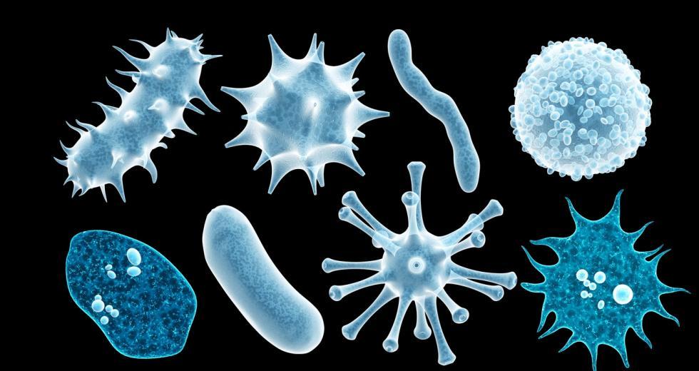 Verschiedene Typen von Krankheitserregern