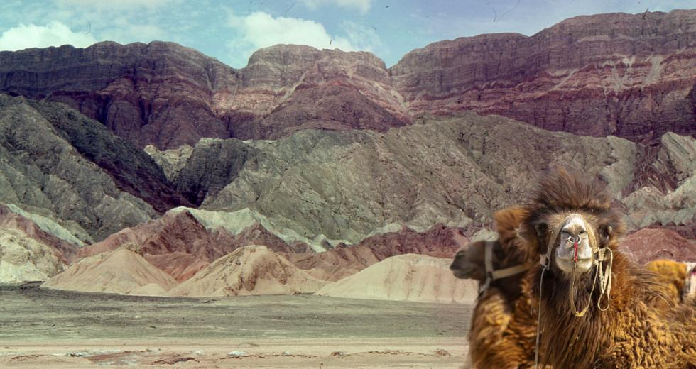 Kamele vor Seidenstraßenkulisse