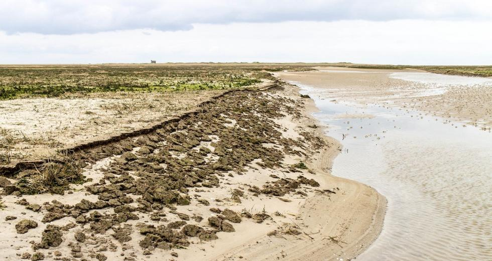 Abbruchkante am südöstlichen Ende der Salzwiesen auf der Scharhörnplate