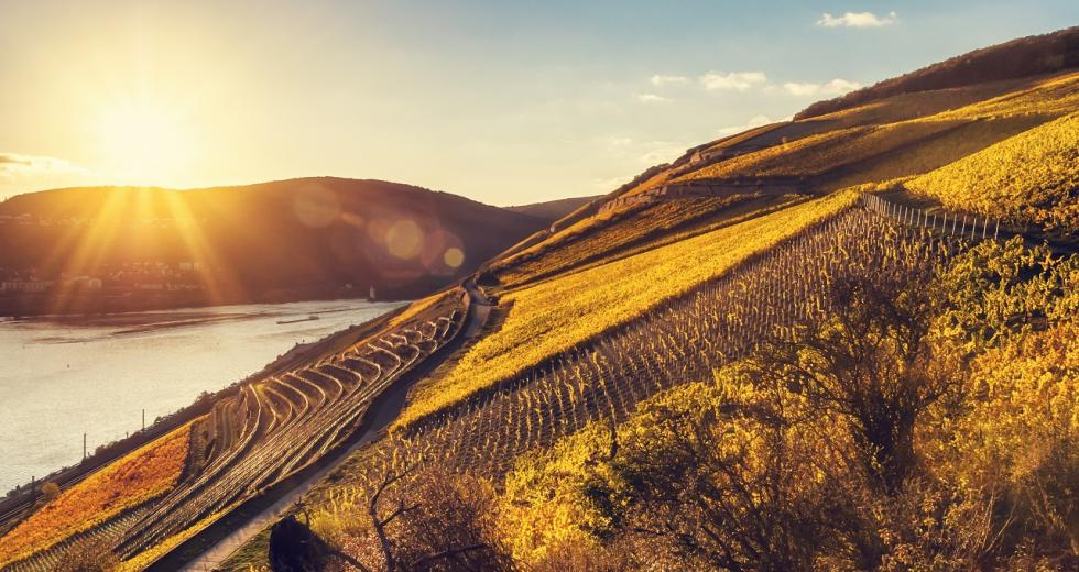 Herbstlicher Sonnenuntergang im Rheintal