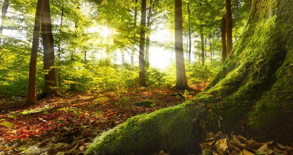 Laubwald im Sauerland