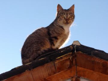 Katze auf dem Dach