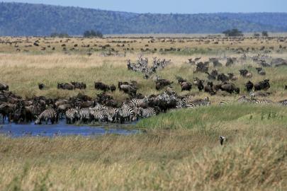 Wassertränke in der Serengeti