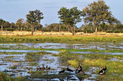 Luangwa, Sambia