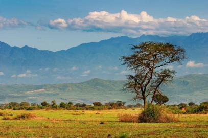 Savannenlandschaft in Uganda