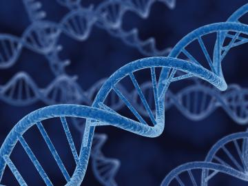 DNA Schema