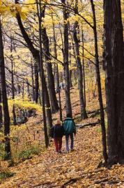 Herbst, Laubwald, spaziergang, Jahreszeit