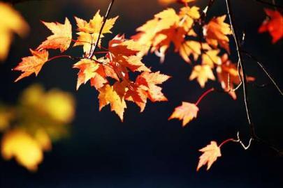 Herbstlaub, Herbst, Laub, Laubwald