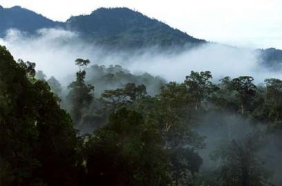 Im Regenwald von Sarawak.