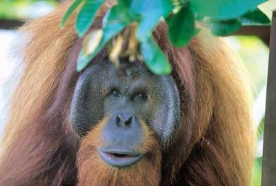 Borneos Tierwelt - exotisch und einzigartig.