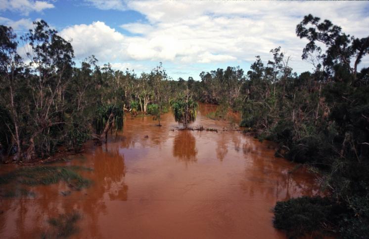 Mangrovensümpfe bei Bourail