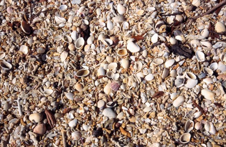 Muscheln am Strand von Pouebo