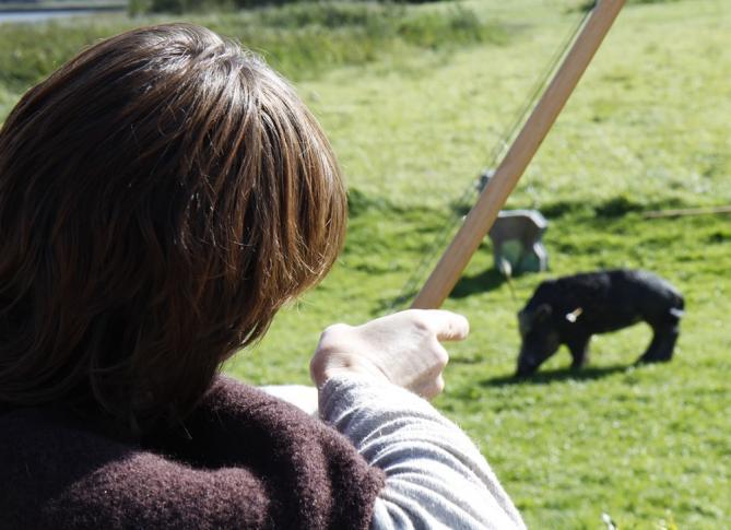 Wikinger - Schwein gehabt