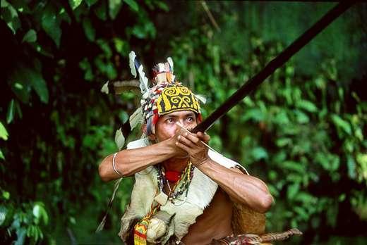 Im Dschungel von Borneo.