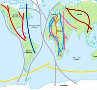 Routen der Zugvögel